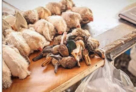 بازار پرهیاهوی پرندهفروشان فریدونکنار
