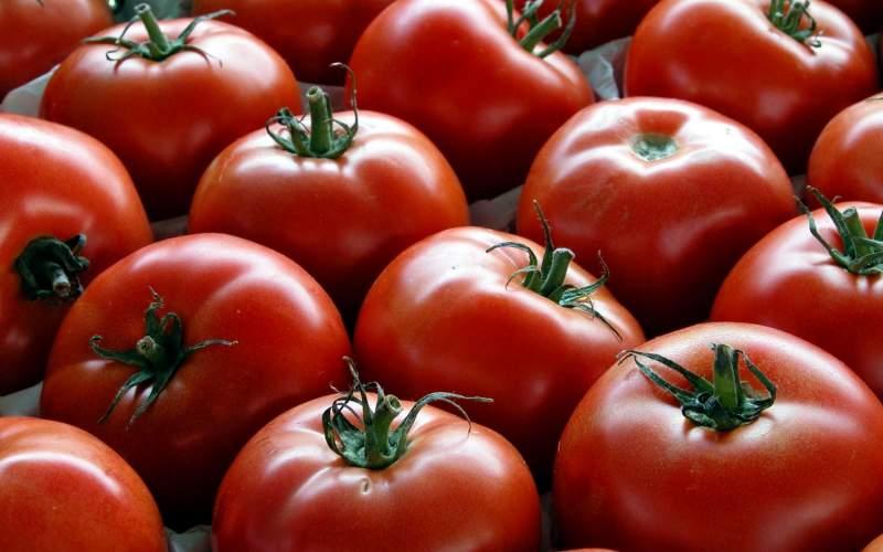 دو عدد گوجه فرنگی، ۵ هزار تومان!