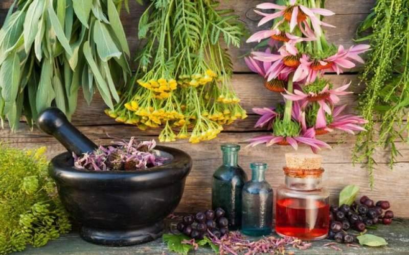 """تاثیر گیاه """"برنجاسپ"""" در درمان کووید-۱۹"""