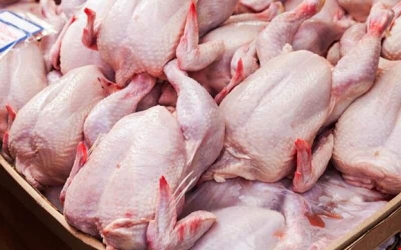 افزایش ۵ برابری قیمت مرغ در دولت روحانی