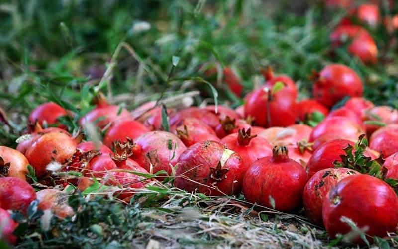 قیمت انار از کیلویی 20 هزار تومان گذشت