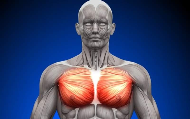 کشف پروتئینی که عضلات را تقویت می کند