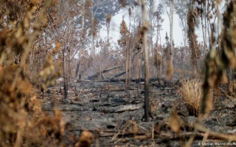 تخریب جنگلهای آمازون به بالاترین میزان رسید