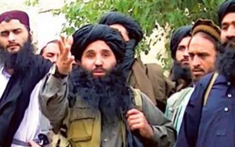 طالبان را جنبش اصیل میخوانند و روزی با داعش نیز هم کاسه میشوند