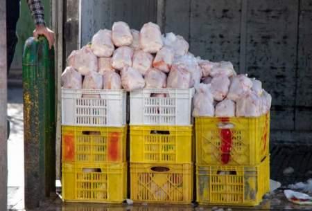 قیمت مرغ تا امروز به چقدر رسیده است