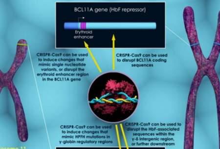 درمانبیماریهایخونیخطرناکبا دستکاری ژنتیک