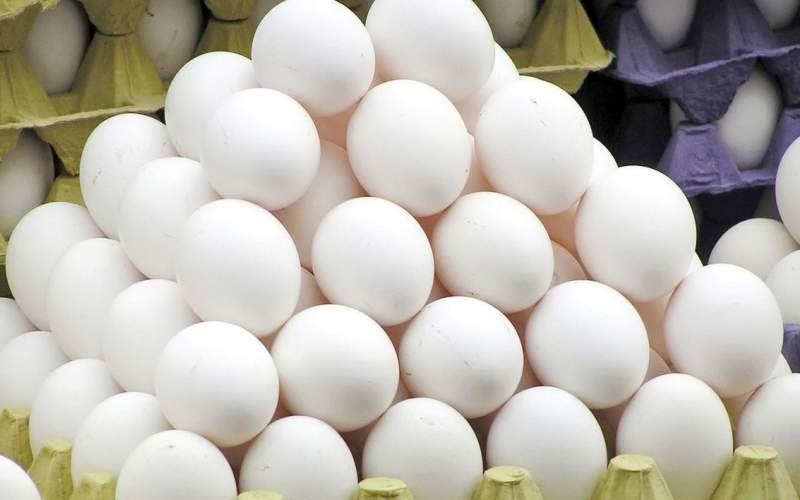قیمت تخم مرغ به کیلویی ١٥ تومان رسید