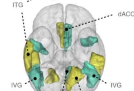 تنهایی چه تغییری در مغز ایجاد میکند؟