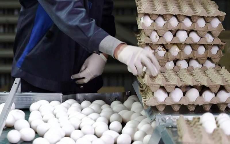 علت گرانی دوباره تخممرغ چیست؟
