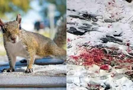 حمله خونین سنجابها به رهگذران نیویورکی