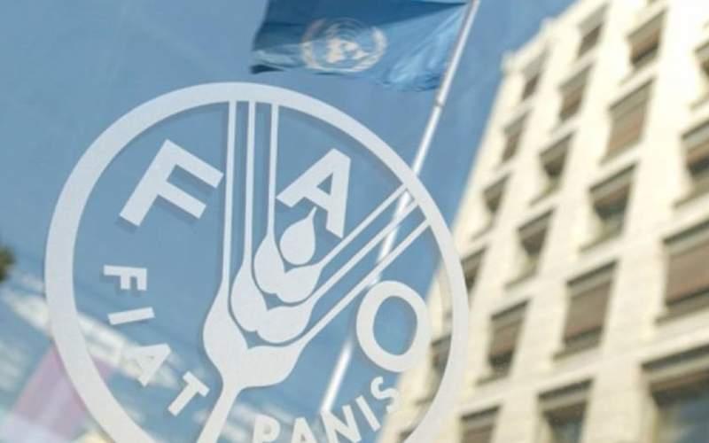 فائو: مواد غذایی در سال ۲۰۲۰ گرانتر شد