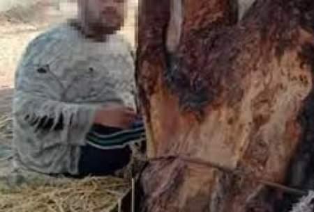 مادر بیرحم، پسرش را ۱۵سال به درخت بست