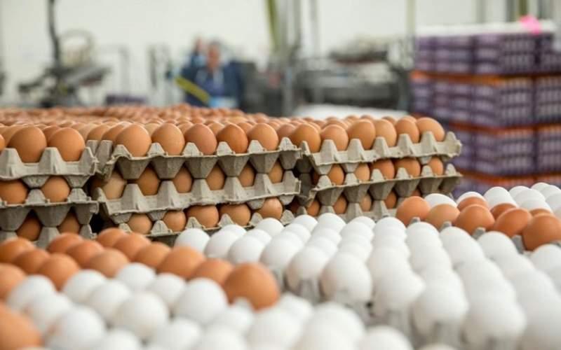 قاچاق تخممرغ هر شانه ۷۰ هزار تومان