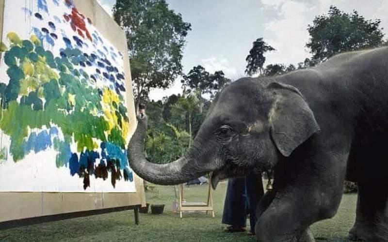 فیلهایی که نقاشی میکشند!/تصاویر