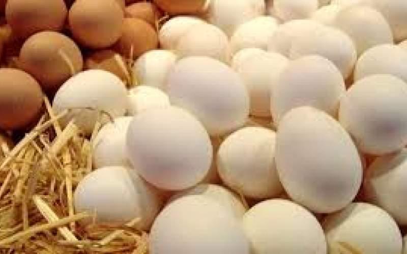 عرضه تخم مرغ با قیمت شانهای ۳۴هزار تومان