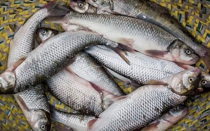 سرانه پایین مصرف انواع ماهی در تهران