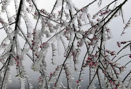 شادی برف در ویتنام