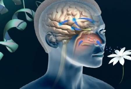 با این تست آلزایمر را زودتر تشخیص دهید