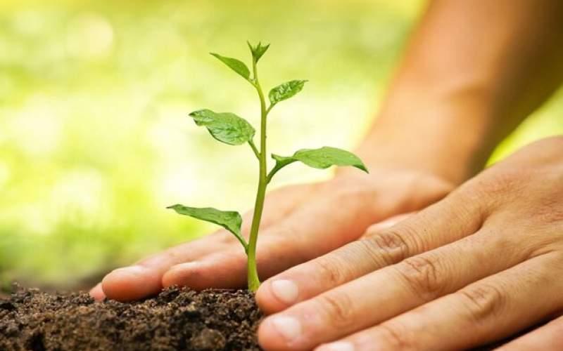 کاشت درخت به یاد جان باختگان کرونا
