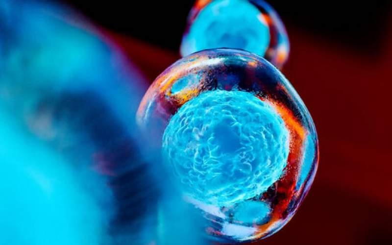 نانوذرهایکهمیتواندسلولهای بنیادی را ردیابی کند