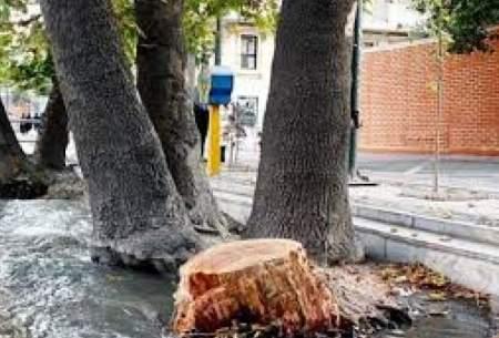 افزایش ۲۵ درصدی جریمههای قطع درختان