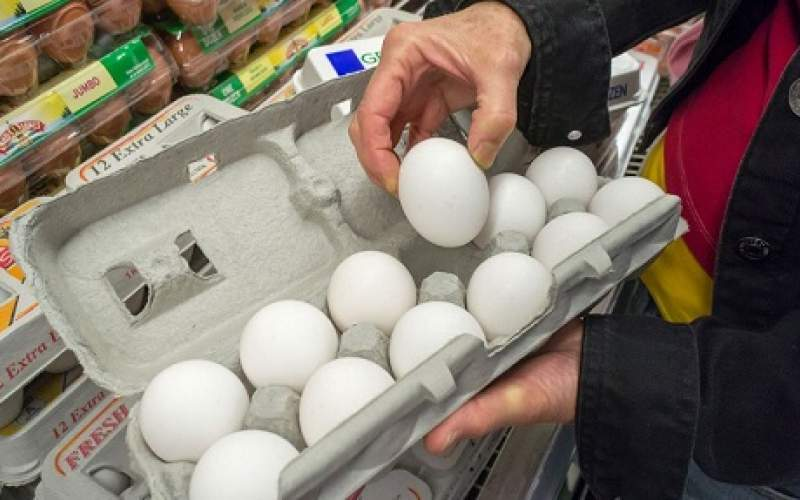 تخممرغ در برخی استانها کمیاب شد