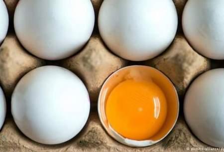 در هفته چند تخممرغ باید مصرف کنیم؟