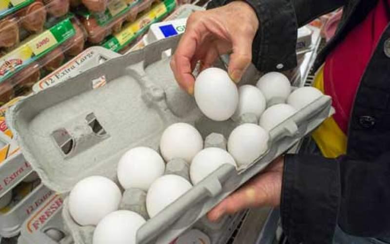 تخممرغ در جنوب کشور کمیاب شد