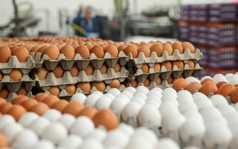 حداقل قیمت هر تخم مرغ ۱۲۰۰تومان است
