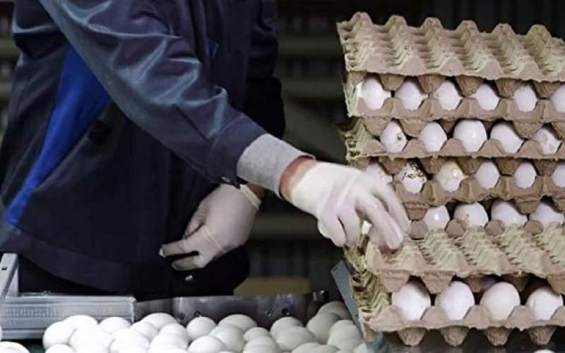 رانت ۱۶میلیارد تومانی در بستهبندی تخم مرغ