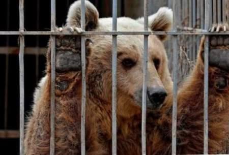 سرنوشت حیوانات در باغوحشهای ایران؛ مرگ