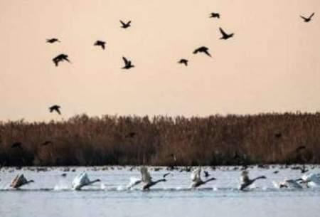 افزایش دو برابری پرندگان مهاجر در بوجاق