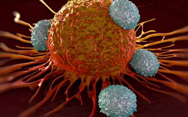 یک درمان ترکیبی برای مهار سرطان لوزالمعده