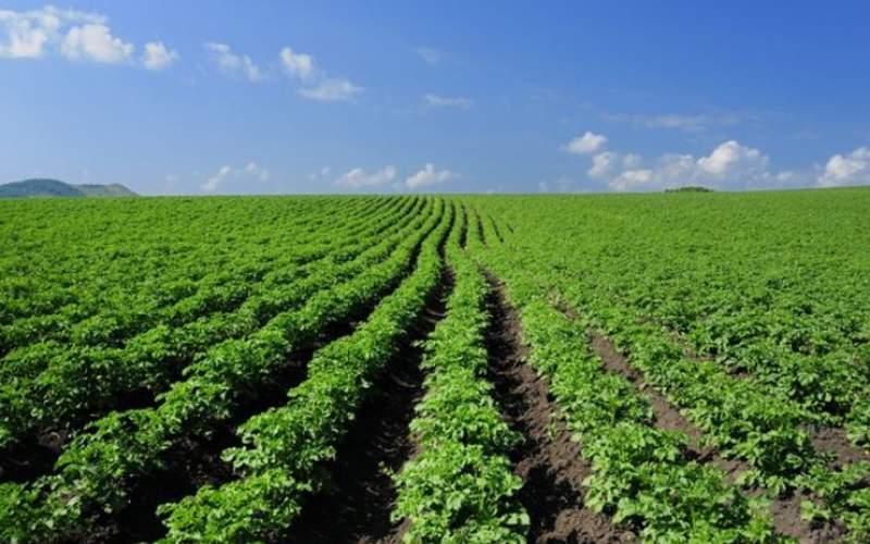 آیا گیاهان تراریخته بر سلامت انسان تاثیر دارد؟