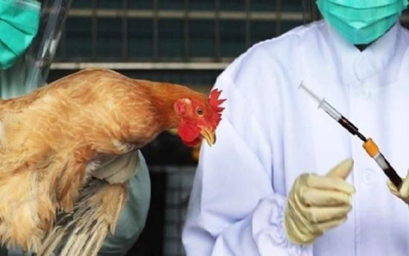 مشاهده  آنفلوانزای فوق حاد پرندگان در تبریز