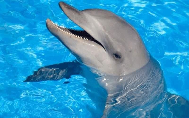شخصیت شما چقدر شبیه دلفین است؟
