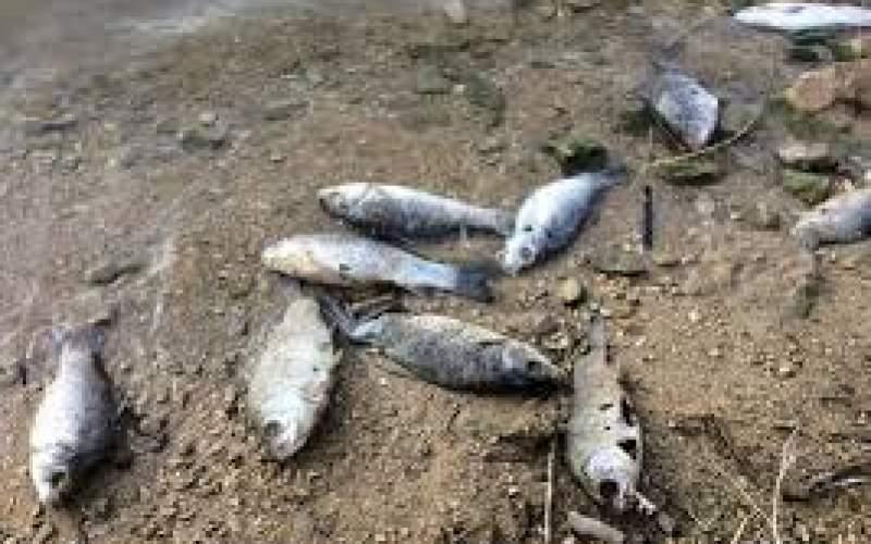 تلف شدن ماهیان در سواحل عسلویه