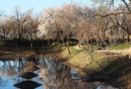 """شکوفه های زمستانی در قزوین  <img src=""""https://cdn.baharnews.ir/images/picture_icon.gif"""" width=""""16"""" height=""""13"""" border=""""0"""" align=""""top"""">"""