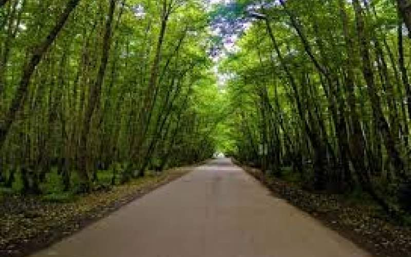 طرح تنفس جنگل تا ۱۴۰۵ تمدید میشود