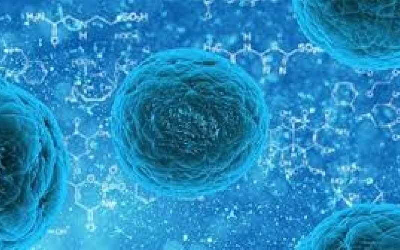 درمان بیماری عصبی با افزایش سلولهای بنیادی