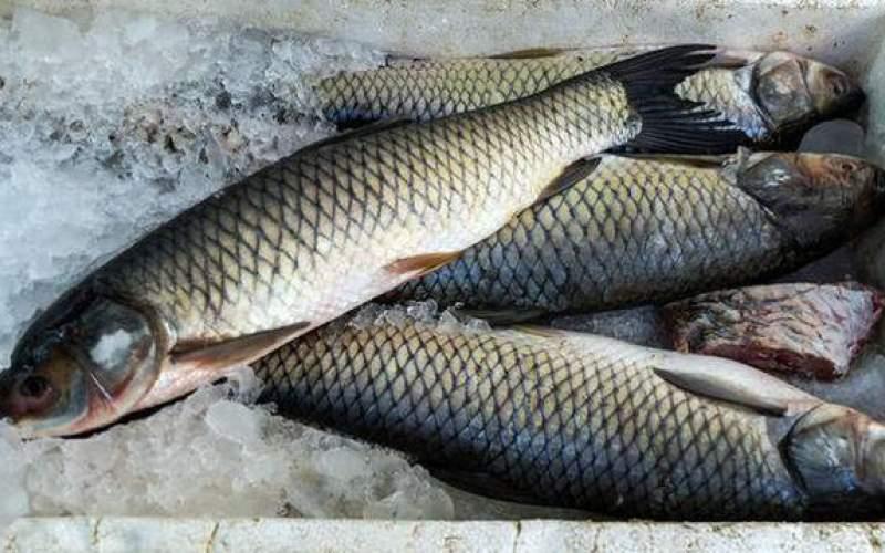 افزایش قیمت ماهی در آستانه شب عید