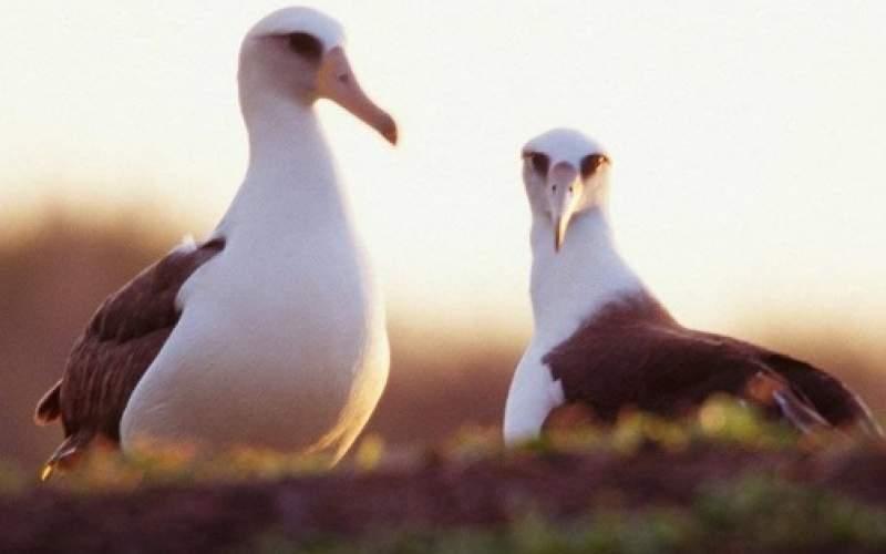 پیرترین پرنده جهان در۷۰سالگی صاحب جوجه شد