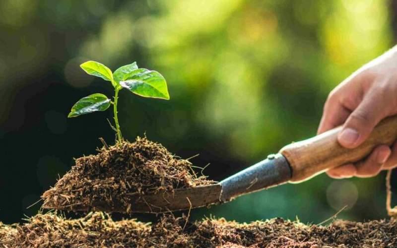 کاهش هزینه گرمایش زمستانی با کاشت درختان