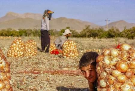 تراژدی پیاز و اشک کشاورزان خراسان شمالی