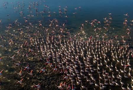 "پایان مهاجرت پرندگان به میانکاله  <img src=""https://cdn.baharnews.ir/images/picture_icon.gif"" width=""16"" height=""13"" border=""0"" align=""top"">"