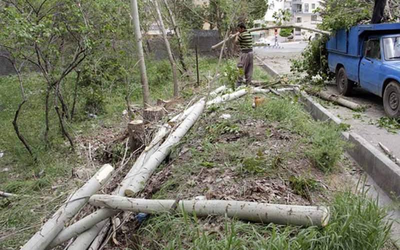 جریمه۳۵۰میلیاردی قطع درختان پولهاکجا رفت