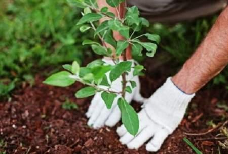 ایجاد فضای سبز، راه حل مشکلات شهری