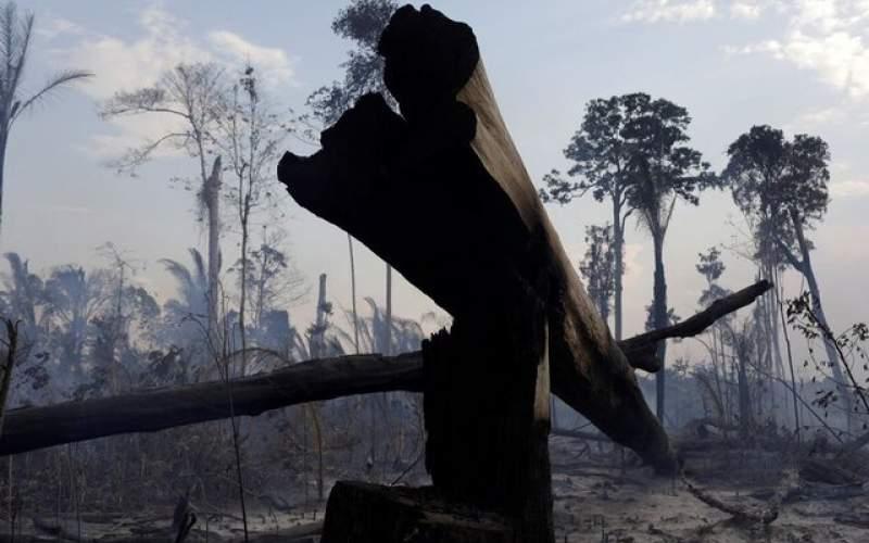تخریب دو سوم از جنگل های استواییِ جهان