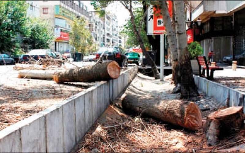 شهرداری به دنبال درآمد از قطع درختان!