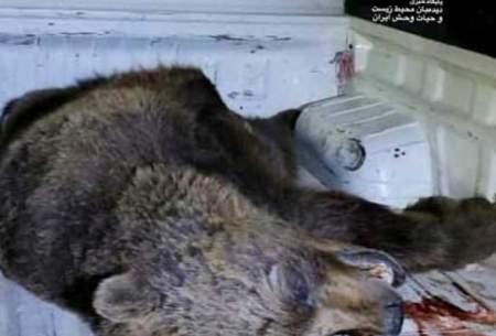مرگ دردناک خرس قهوهای در پارک ملی گلستان
